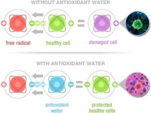 Effective-Antioxidant-ecana