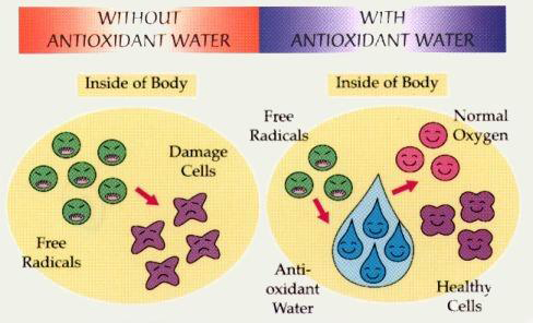 Oxygenate-Antioxidants-ecana